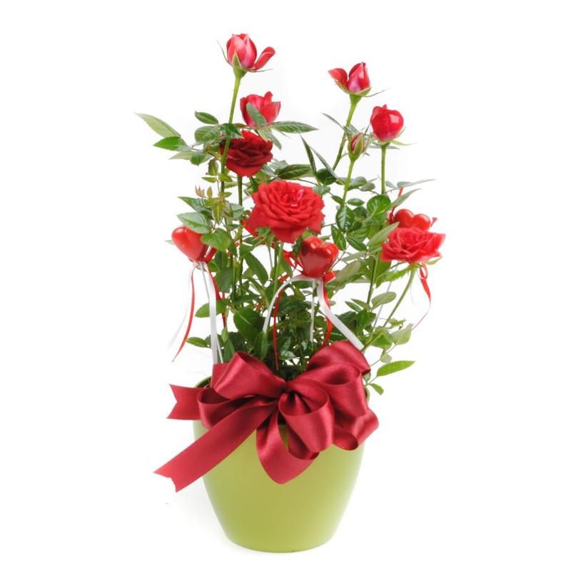 Roses In A Pot Flower Gift